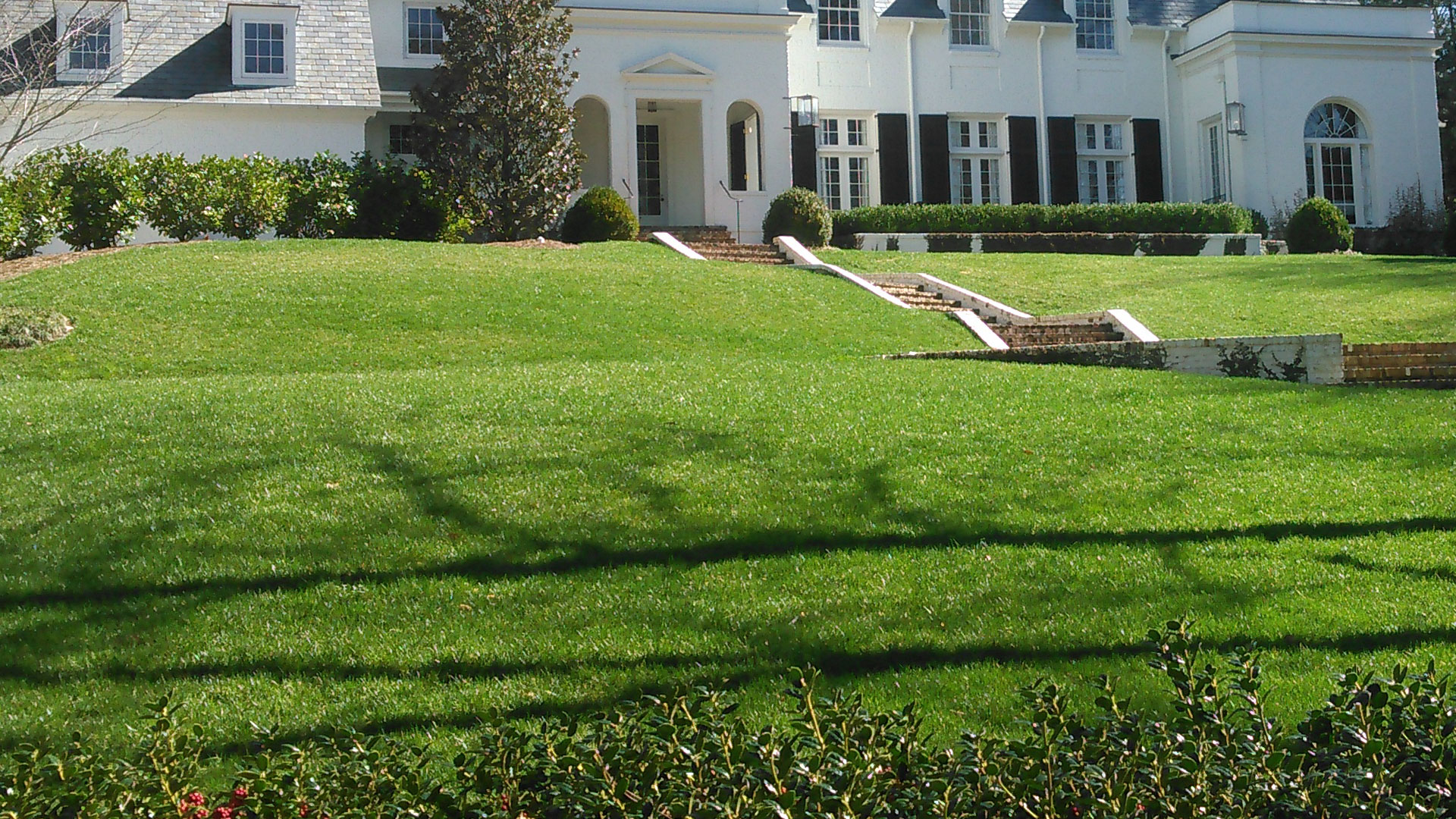 This green healthy lawn was aerated and over seeded during the spring time.