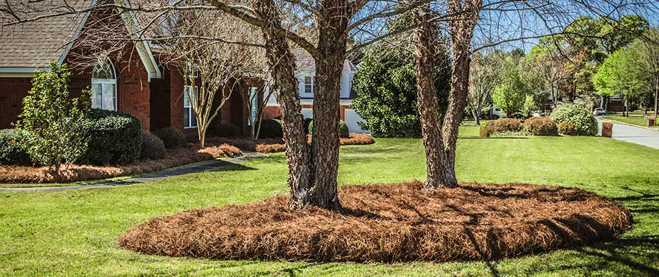 Landscape bed with pine straw mulch in Smyrna, GA.