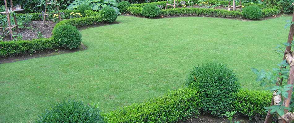 Landscaping in Marietta, GA with regular landscape and lawn maintenance.