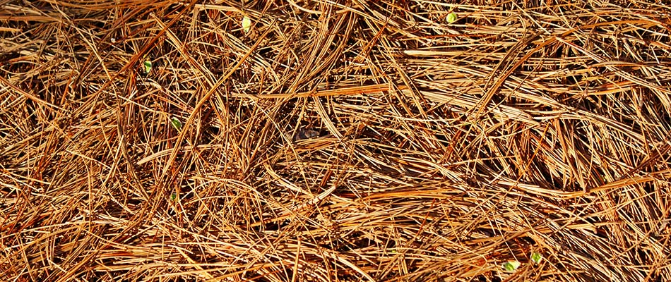 What's The Best Month to Install Mulch or Pine Straw in Atlanta?