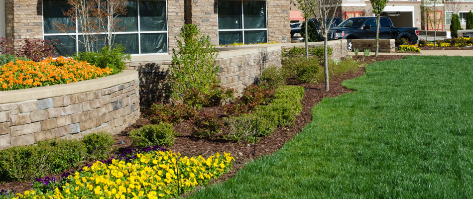 Landscaping we installed in the front of a commercial building located in Atlanta, GA.