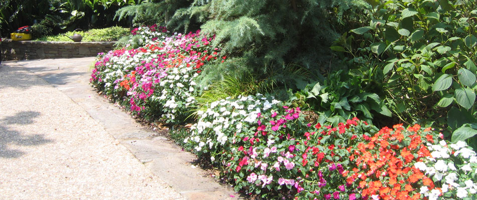 Red, pink, and white flowers that we planted at a residential property.