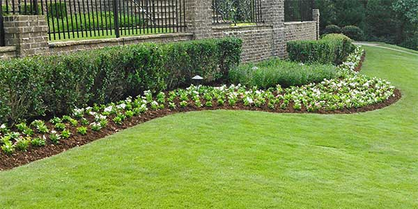 Annual flowers and plants installed in Smyrna landscape bed.