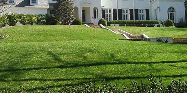 Aerated and overseeded home lawn in Buckhead